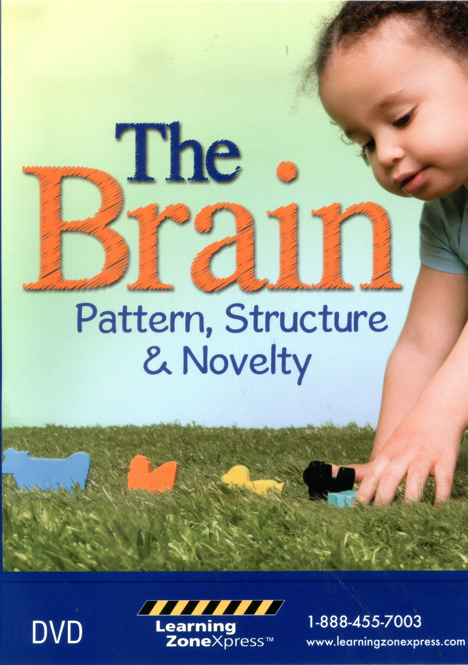 The brain pattern, structure & novelty /