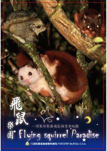 飛鼠樂園 頂笨仔聚落飛鼠保育全紀錄 = Flying squirrel paradise /